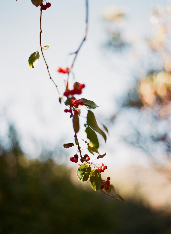 sylviegil-0201-sg-burgundy-calistoga-chocolate-fall-fcolors-gil-huppah-napa-outdoors-porsche-ranch-red-sylvie-wedding